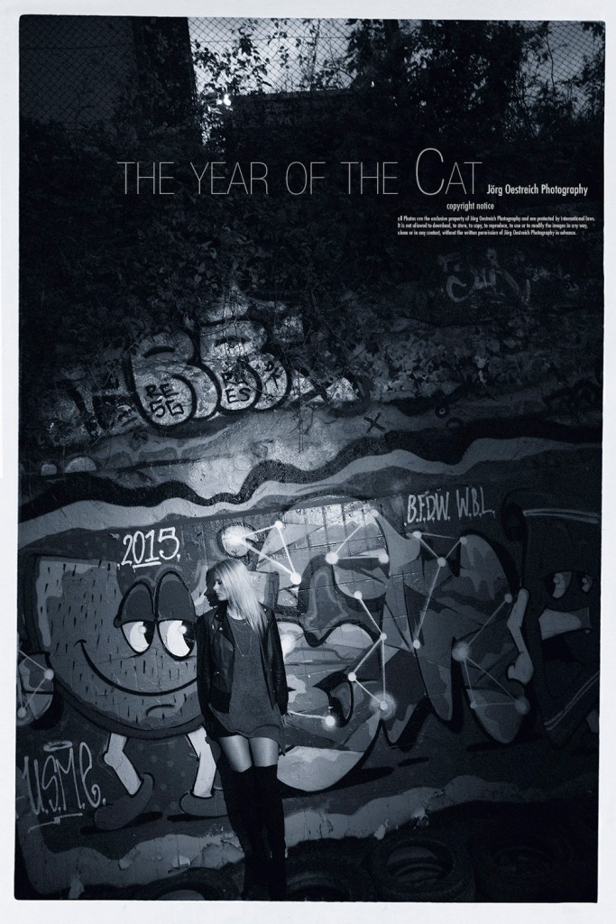 the year of the cat