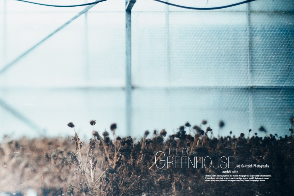 The old Greenhouse